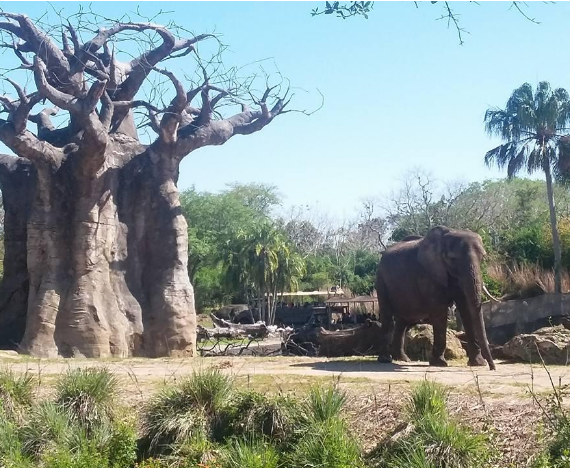 Review of Animal Kingdom Tour 'Caring for Giants' (photos included)