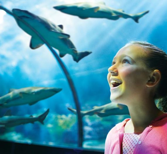 Sea World Orlando Summer Offers for Pass Members